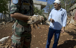 UNIFIL Veterinary doctor Lt. Col. Sharma visiting a small chicken farm in Kafer Chouba.